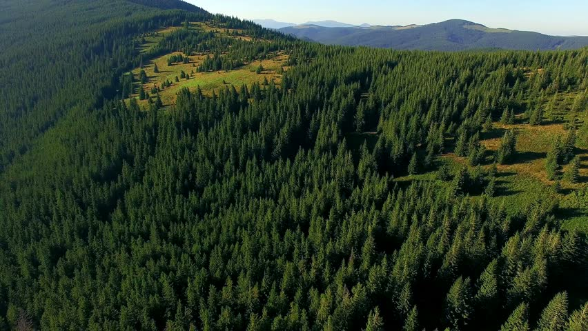 Aerial view of wooded mountains, wonderful flight to the beautiful forest in the mountains, Aerial view of spruce forest, mountains landscape, Flying over mountains and hills with wild forest | Shutterstock HD Video #25375373