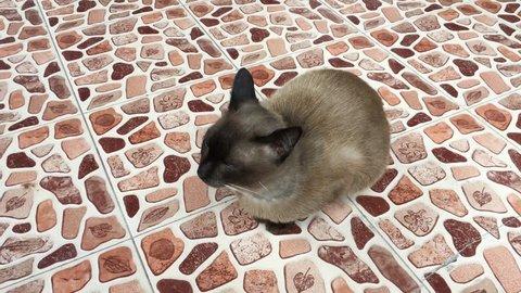 Cat Animal Background Kitten Beautiful Stock Footage Video 100 Royalty Free 26884963 Shutterstock