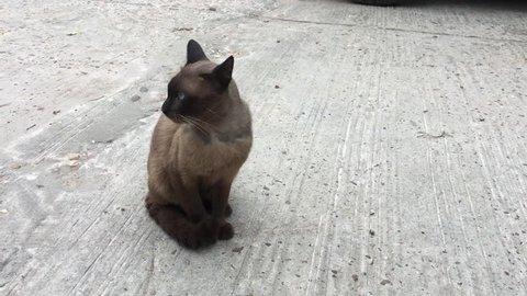 Cat Animal Background Kitten Beautiful Stock Footage Video 100 Royalty Free 26884993 Shutterstock
