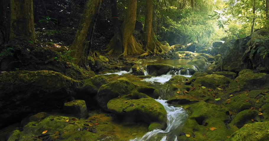 Fresh water stream flows among green mossy rocks and stones in tropical forest. Mountain river in jungle forest in Thailand. Beautiful nature landscape | Shutterstock HD Video #25435133