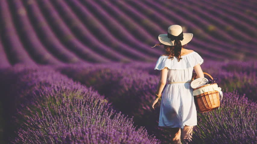 Woman Walking with picnic busket in an Endless Lavender Field. SLOW MOTION 120 FPS. Unrecognizable girl in a hat enjoying blooming lavender field. Plateau du Valensole, Provence, France, Europe.