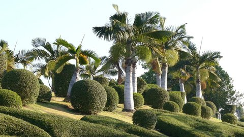 Tropical landscaping, beauty and ecology concept.
