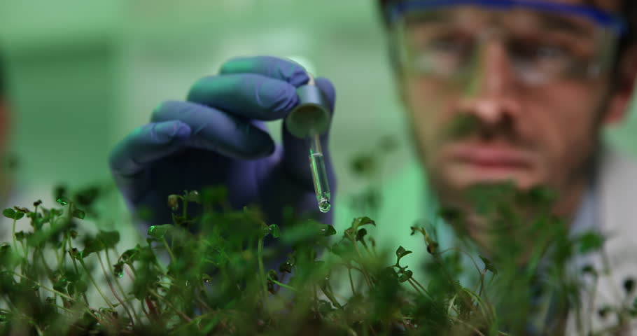 Researcher Wet Plant Seedling Biological Research Genetic Engineering Laboratory