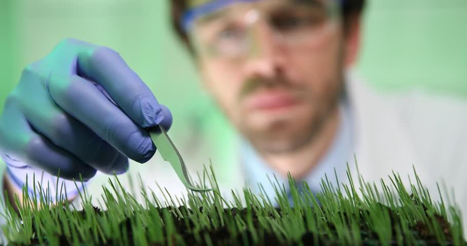 Researcher Work Wetting Wheat Seedlings Genetic Engineering Laboratory Close Up | Shutterstock HD Video #25572365