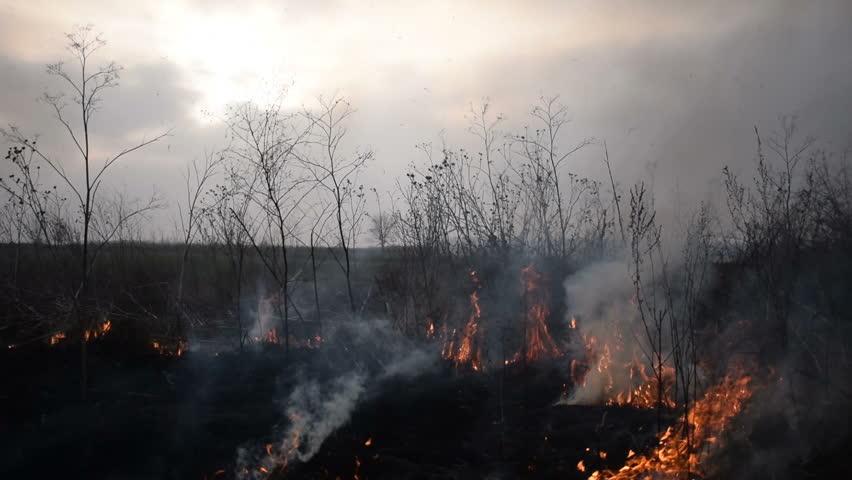 Uncontrolled fire in a field    Shutterstock HD Video #25676546