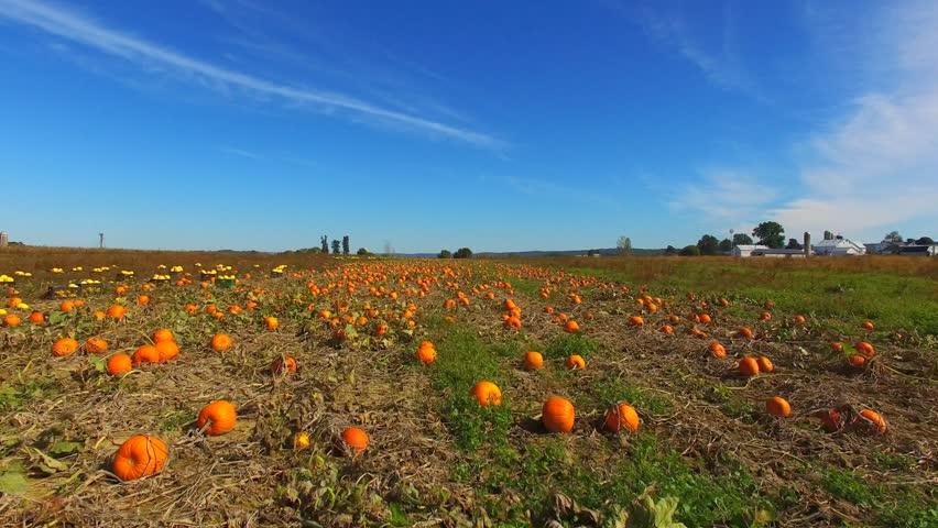 Low Flyover of Pumpkin Patch shot in 4K in Rural Pennsylvania.