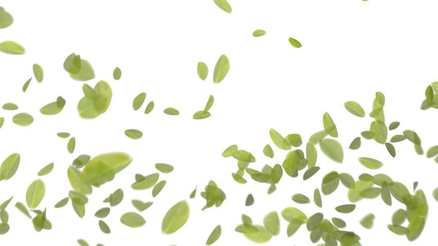 4K Falling Leaves