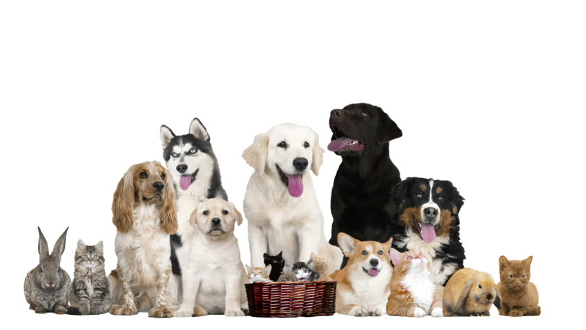 Group Funny Pets On White Stock Footage Video 100 Royalty Free 25914155 Shutterstock