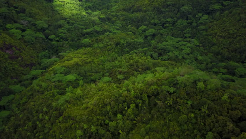 4k aerial video descending in tropical dark green forest on cloudy day  #25991837