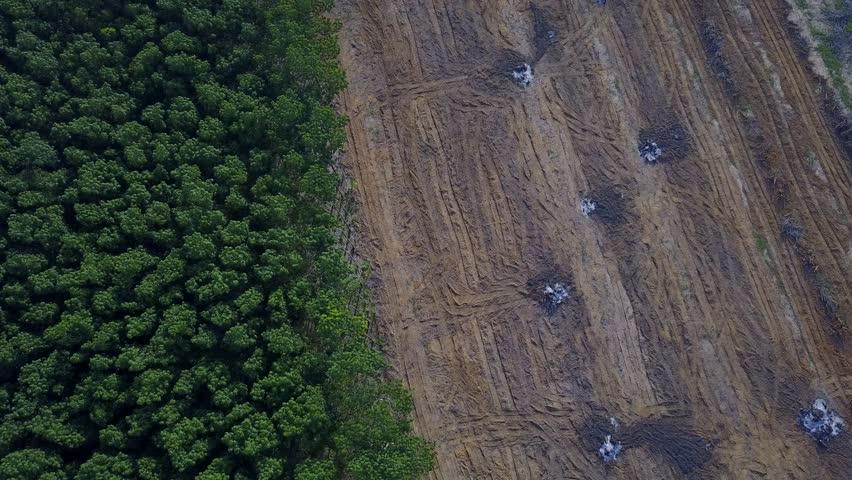 Deforestation aerial drone view. Environmental destruction, logging.