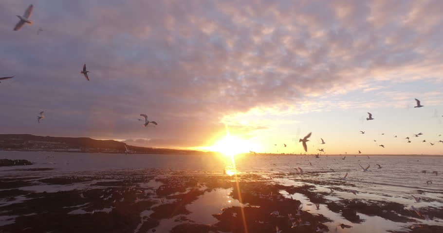 Drone shot trough group of seagulls at the coast of Ireland's eye, Ireland during sunset. | Shutterstock HD Video #26081663