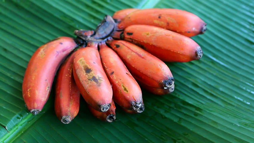 Red Bananas - Rare Species Stock Footage Video (100% Royalty-free) 26088542 | Shutterstock
