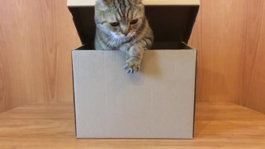 Cat gets out of the box   Shutterstock HD Video #26091977
