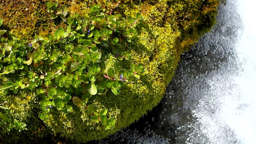 Moss and Water | Shutterstock HD Video #2611676