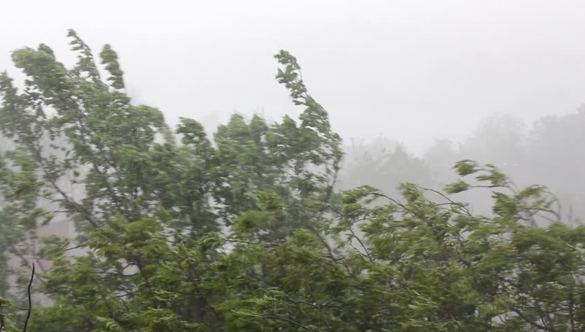 Strong winds and rain shook the trees