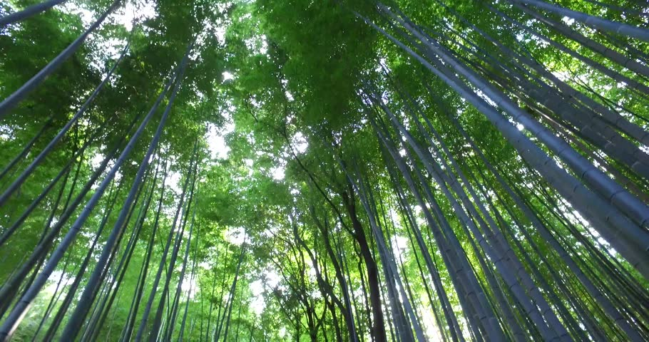 POINT OF VIEW: Walking inside the Bamboo Forest in Kyoto, Japan.