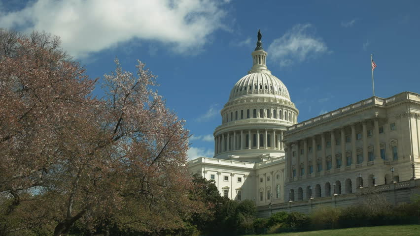 The capitol building and flowering cherry trees in the us capital of washington dc