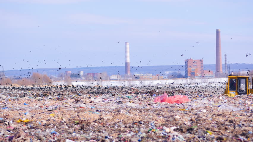 Birds sitting on the landfill's garbage.4K. | Shutterstock HD Video #26402867