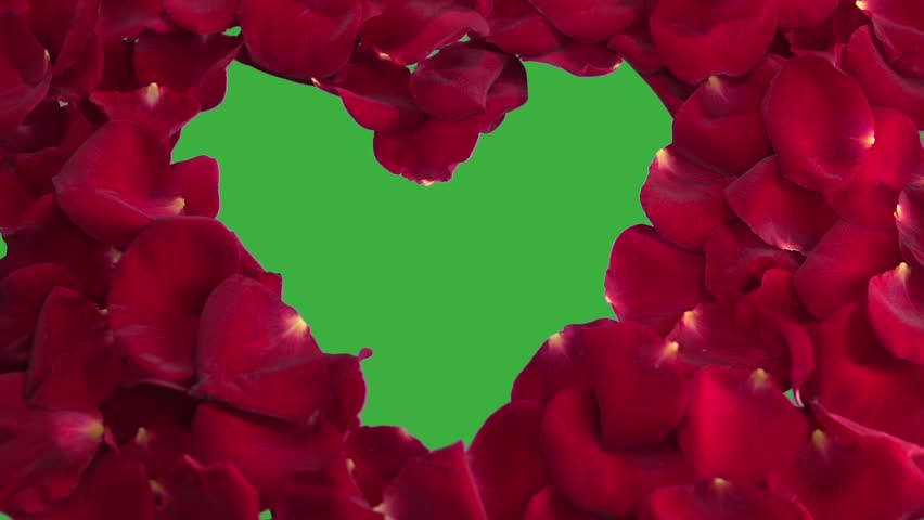 Background from petals of red roses. The heart is made up of the petals of the red rose.  Chroma key, green screen background.   Slow motion 240 fps. Slowmo. Full HD 1080p.  | Shutterstock HD Video #26415743