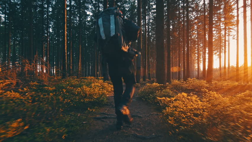 Hiker hiking in forest at sunset. hikers enjoying the awesome view at sunset in a beautiful german forest Schwarzwald landscape.
