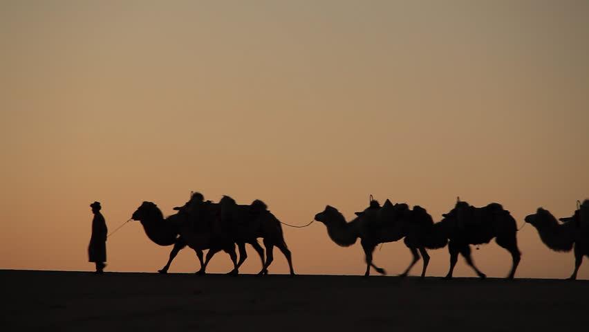 Camel caravan at sunset