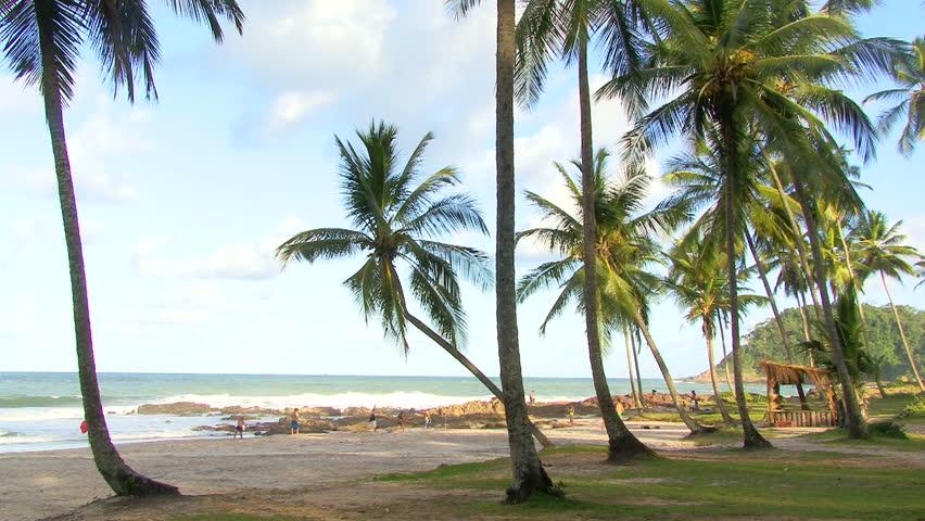 Palms on Resende Beach in Itacare, Brazil #2646767