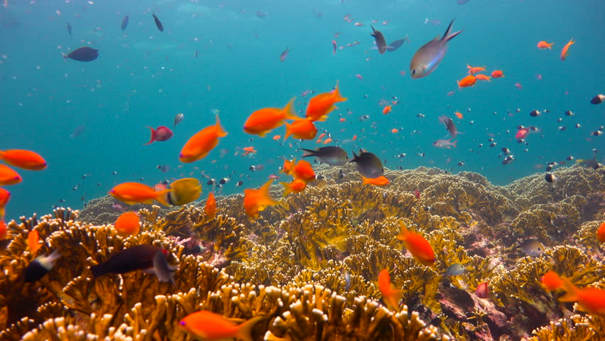 Colorful coral reef. Exciting diving off the island of Mafia. Tanzania. Of the Indian ocean.