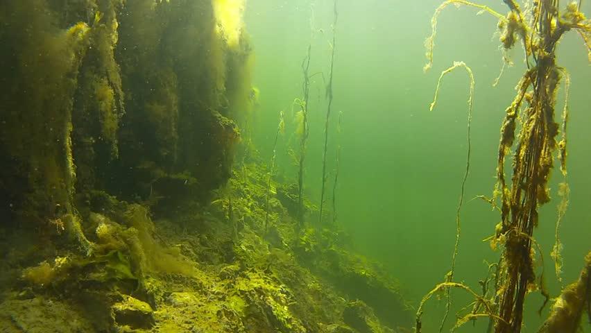 Underwater ecosystem in fjord | Shutterstock HD Video #2657249