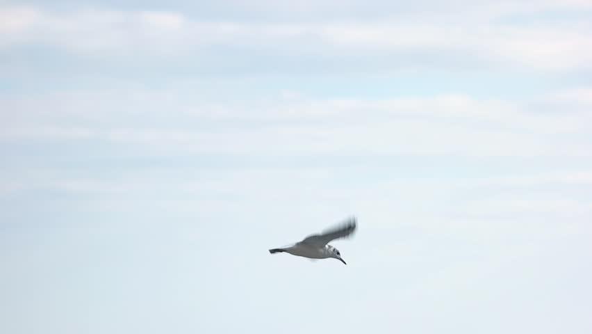 Gull flying over sea. Bird in slow motion. | Shutterstock HD Video #26642482