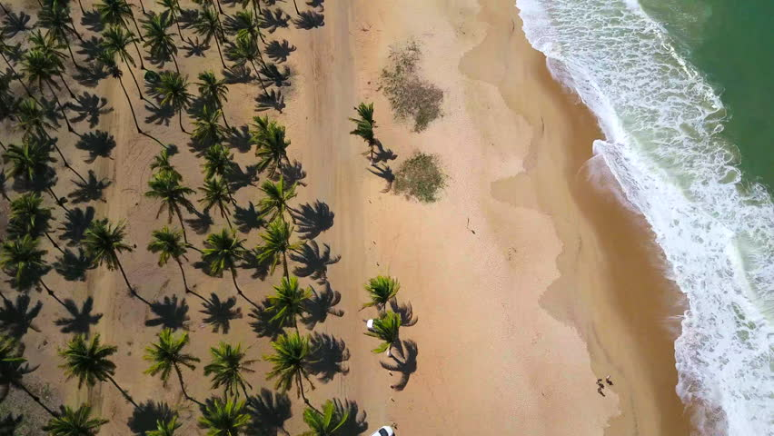 Aerial reveal of Porto de Galinhas Beach at Pernambuco - Brazil. Flying over coconuts trees and beach.  #26687230