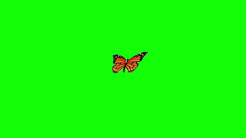 Orange Butterfly Flies Green Screen 3D Rendering Animation