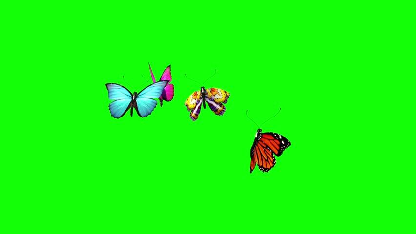Group of Butterflies Flying Green Screen 3D Rendering Animation | Shutterstock HD Video #26822680