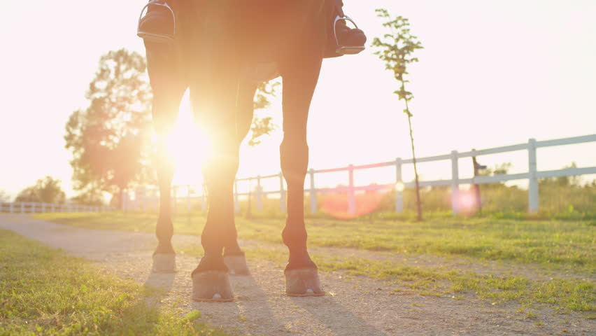 CLOSE UP, DOF: Silhouetted backlit horse legs standing still on the gravel road on stunning countryside ranch surrounded by lush green nature at golden light sunrise. A mare and unrecognizable rider #26911354