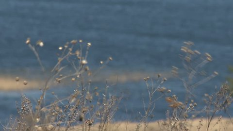 Dry field grass in the wind in front of the water. Beautiful background.