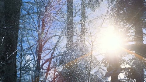 slow motion of snow falling on winter forest trees. weather change background