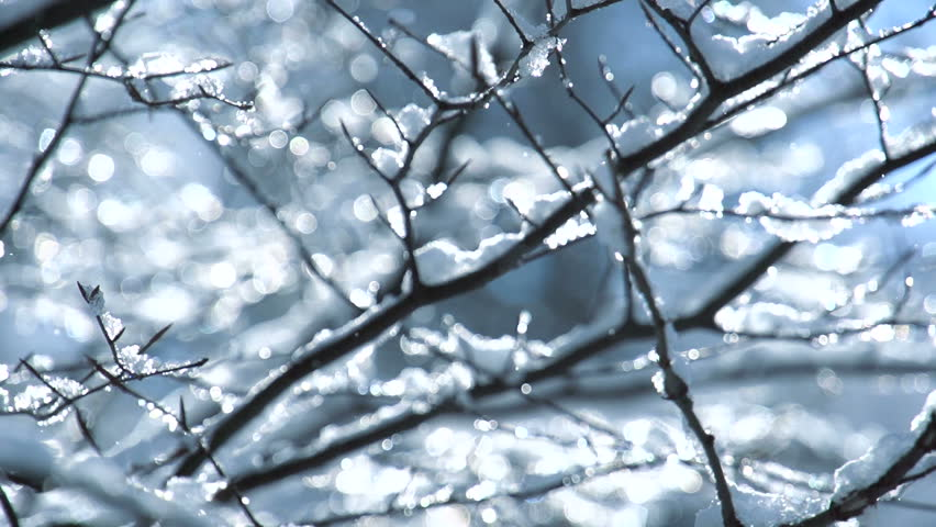 snow falling on leafless tree branches in slow motion. winter christmas season background Royalty-Free Stock Footage #26931724