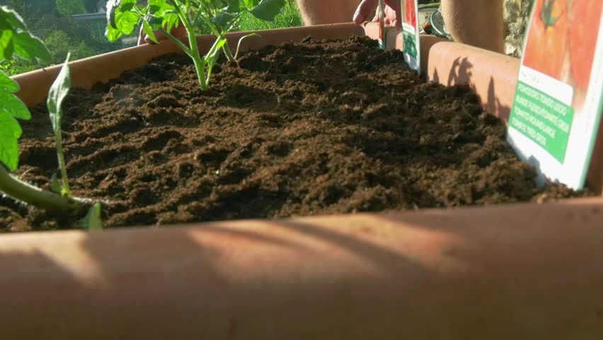 Two males moving freshly planted tomato flowerpot. hands first person view in super slow motion 96fps HD | Shutterstock HD Video #26933566