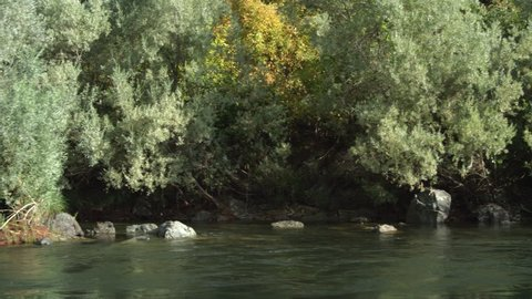 Drifting left past rocks in the stream near a wooded riverbank