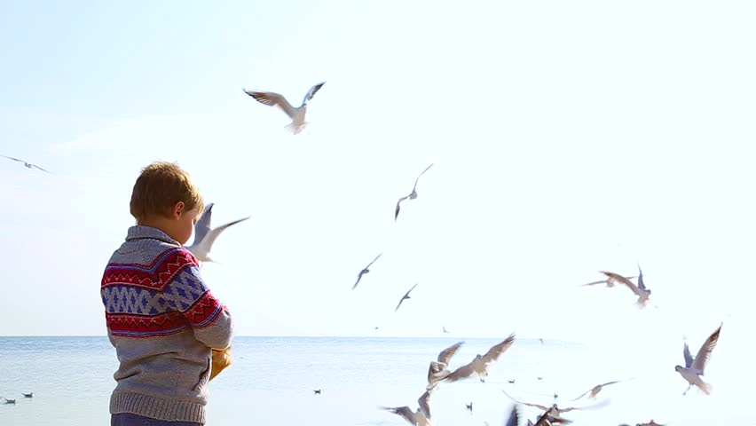 Little 8 year old child feeds beautiful seagulls flying cheerfully in bright blue sky. Birds catching food in air. Real time hd video footage. | Shutterstock HD Video #26976676