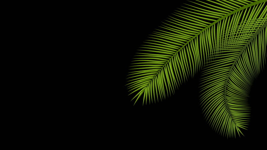 Animated Palm Tree Leaves Swaying Stock Footage Video 100 Royalty Free 27062887 Shutterstock Animated animation cute digital oc pixel painttoolsai tropicalleaf closedspecies milienugget shimezee. animated palm tree leaves swaying stock footage video 100 royalty free 27062887 shutterstock