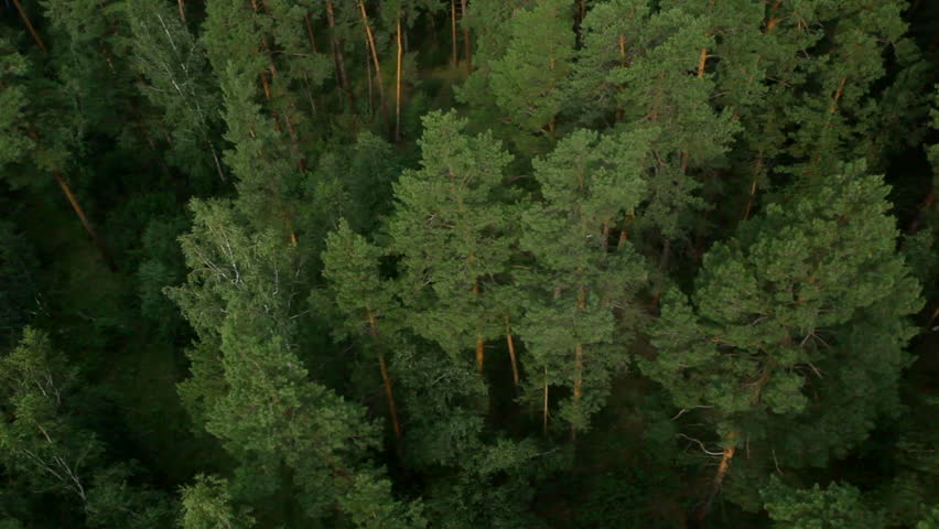 Aerial View. Flying over the beautiful forest trees. Aerial camera shot. Landscape panorama.