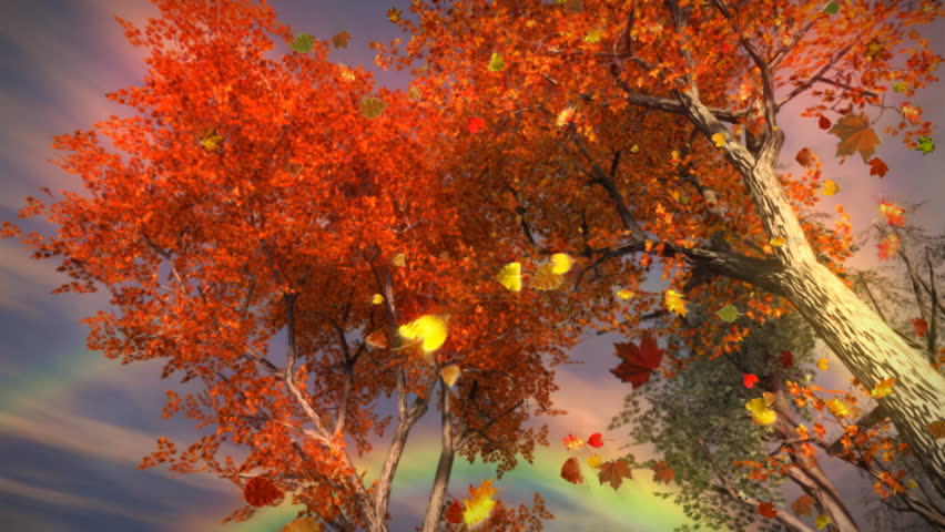 1035 Fall Trees Falling Leaves Stock Footage Video 100 Royalty