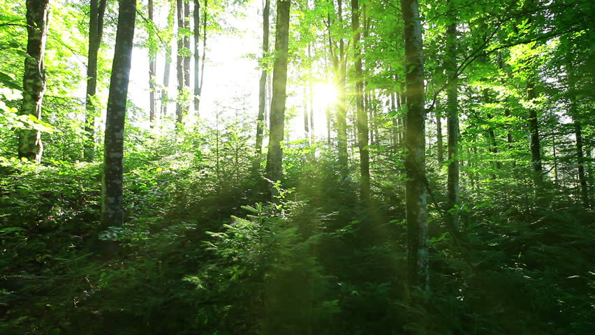 Morning in the forest | Shutterstock HD Video #2713088