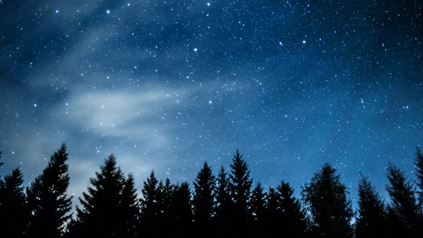 Timelapse of stars moving in night sky over pine trees. #2719001