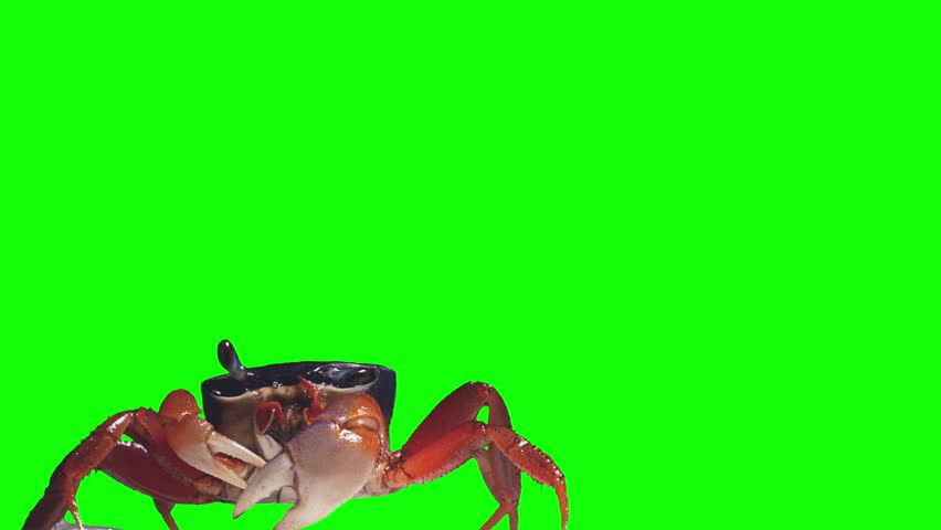 Crab rainbow, cleans eyes, breathes air and crawls. Green screen effect