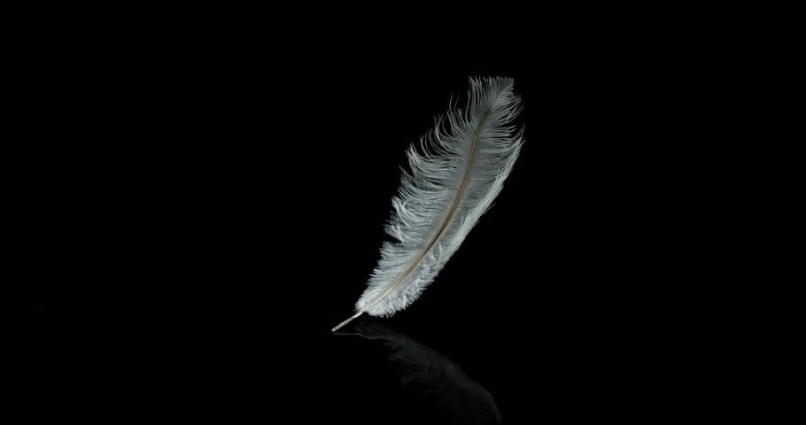 White Feather Falling against Black Background, Normandy, Slow Motion 4K