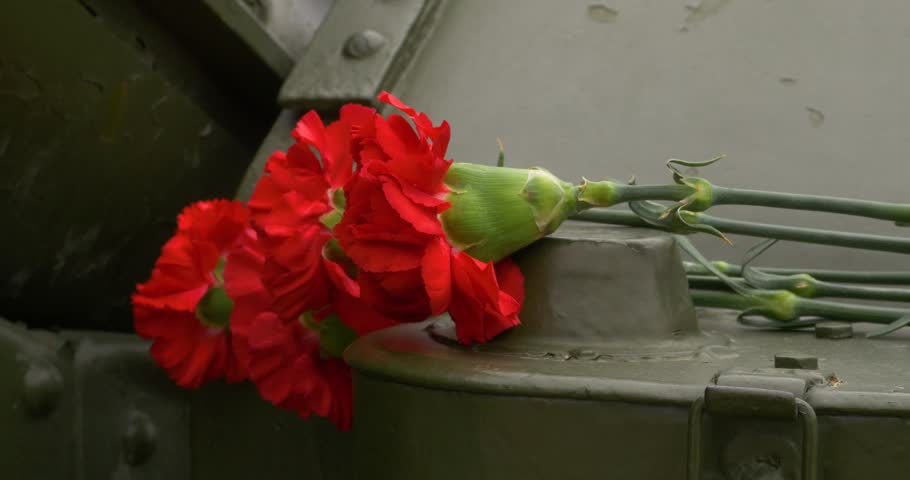 Howitzer and carnation. Carnation flowers symbol of mourning. Close up | Shutterstock HD Video #27427951