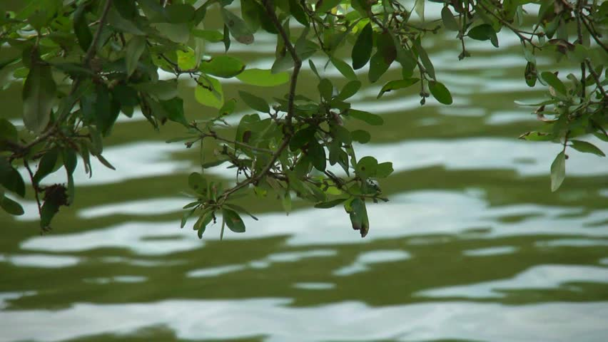 An oak tree branch hanging over a wavy river. #2754587