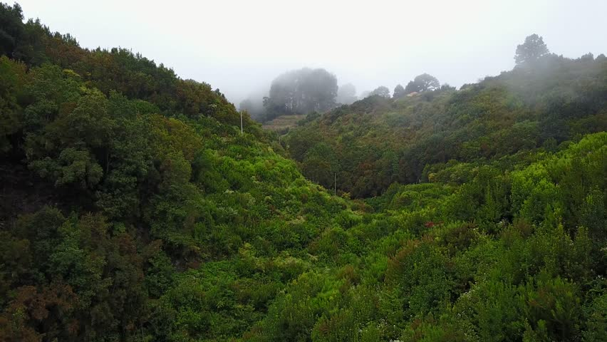 Green ferns and blooming bushes in foggy  rainforest mountain woodland. Aerial deep flight shot in La Palma, Spain  | Shutterstock HD Video #27548308