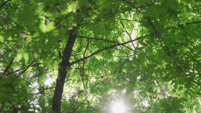 Rays of the sun make their way through the leaves in the forest | Shutterstock HD Video #27552724